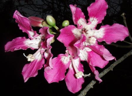 silkflossbloom2.jpg